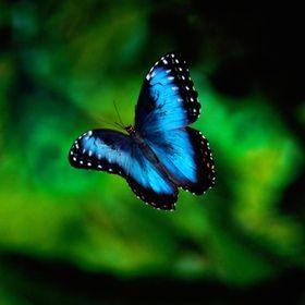 Экологический заповедник «Янода»