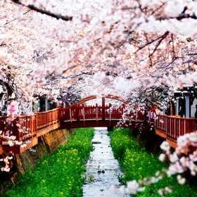 Туры в Южную Корею на фестиваль цветения вишни в 2018 году