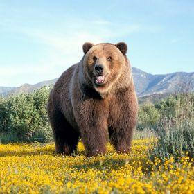 Охота на бурого медведя на побережье Охотского моря