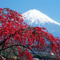 Туры в Японию из Хабаровска
